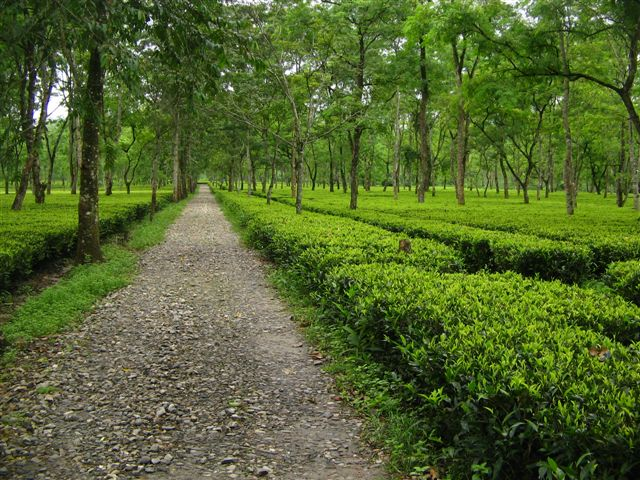 BREAKING: ULFA (I) warns of 'Action' against Tata's Amalgamated Plantation in Assam