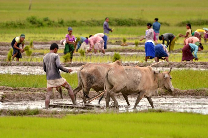 'Assam to maintain MSP for farmers': CM Sonowal asks FCI to set up procurement centres