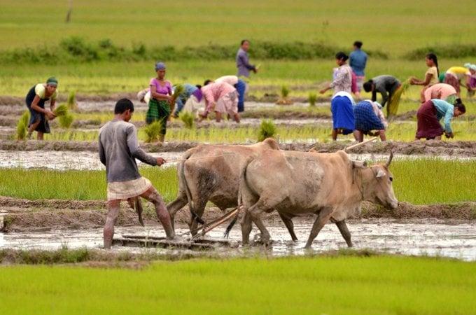 PM Kisan Scheme: Assam Tops Corruption List; Congress Seeks Probe