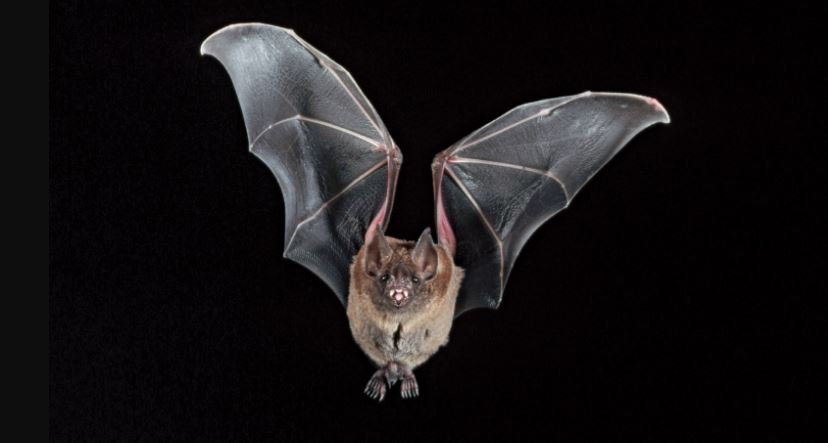 Wuhan institute carried out research on bats in Nagaland without govt nod?
