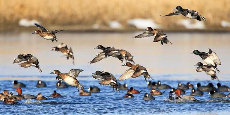 Assam: Kaziranga National Park begins waterfowl census