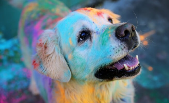 Color your heart with compassion; Keep animals safe this Holi