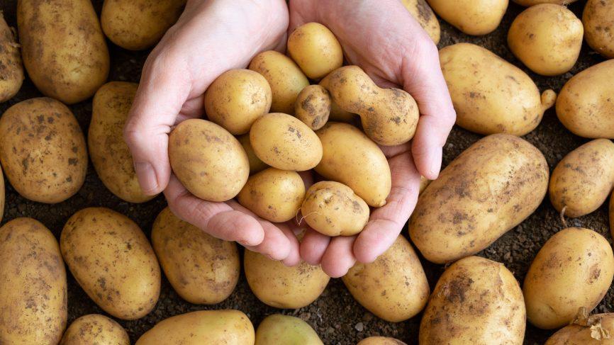 NFR to Run 5 Kisan Rails for Potato Transportation